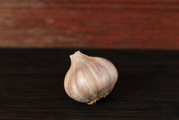 Garlic Bulb (Chesnook Red) - Medium