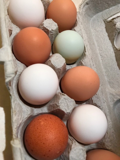 Eggs, pastured & bundled