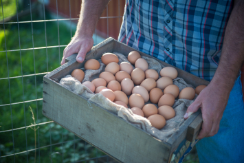 Dozen Pastured Eggs