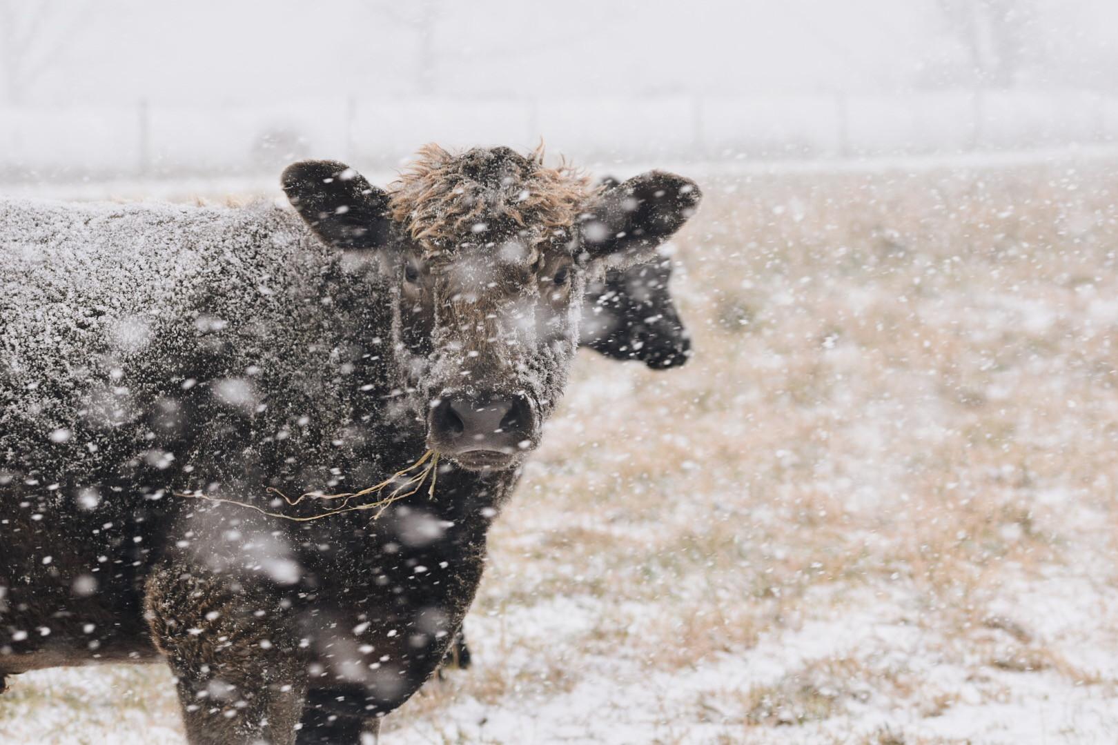 Grassfed Beef
