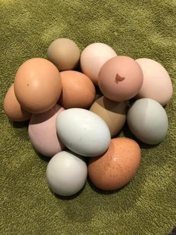Fat Hen Farm Eggs (1 dozen)