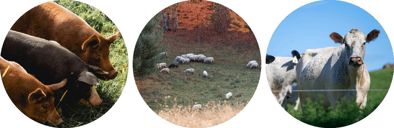 Wisconsin pastured animals