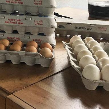 Chicken & Duck Eggs