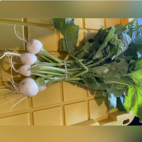 Hakurei Japanese salad turnips