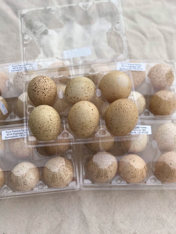 Pastured Turkey Eggs