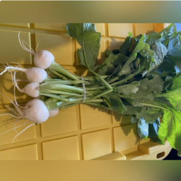Hakurei Japanese salad turnips