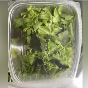 Rinsed Salad Mix, box