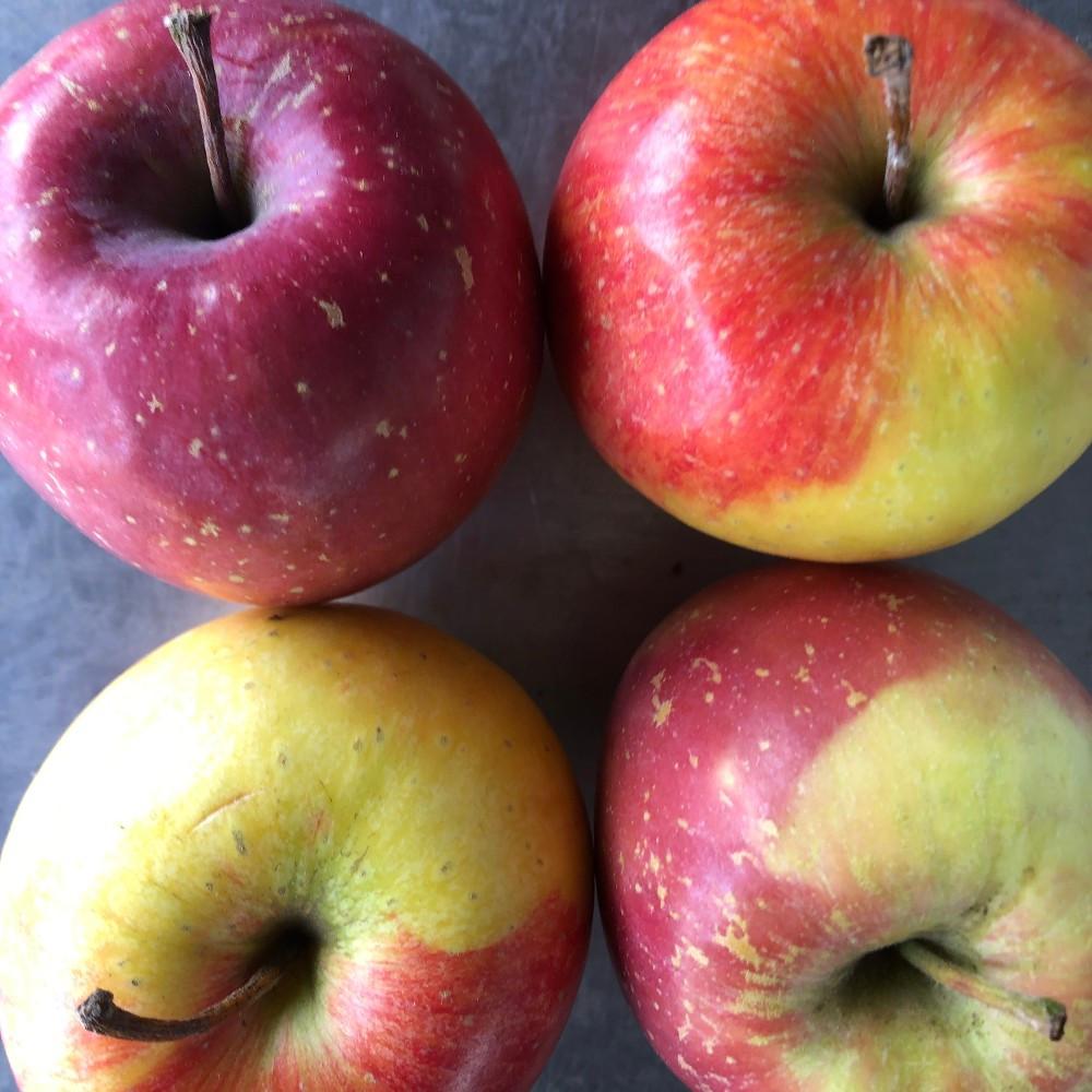 Apples  - Gorge Grown