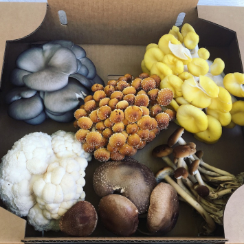 Small Mushroom Variety Pack
