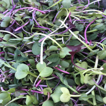 MicroGreens - Spice up your life!