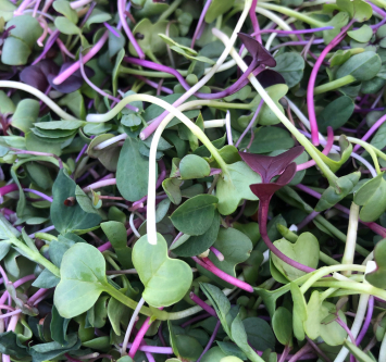 Spice Up Your Life! Organic Microgreens