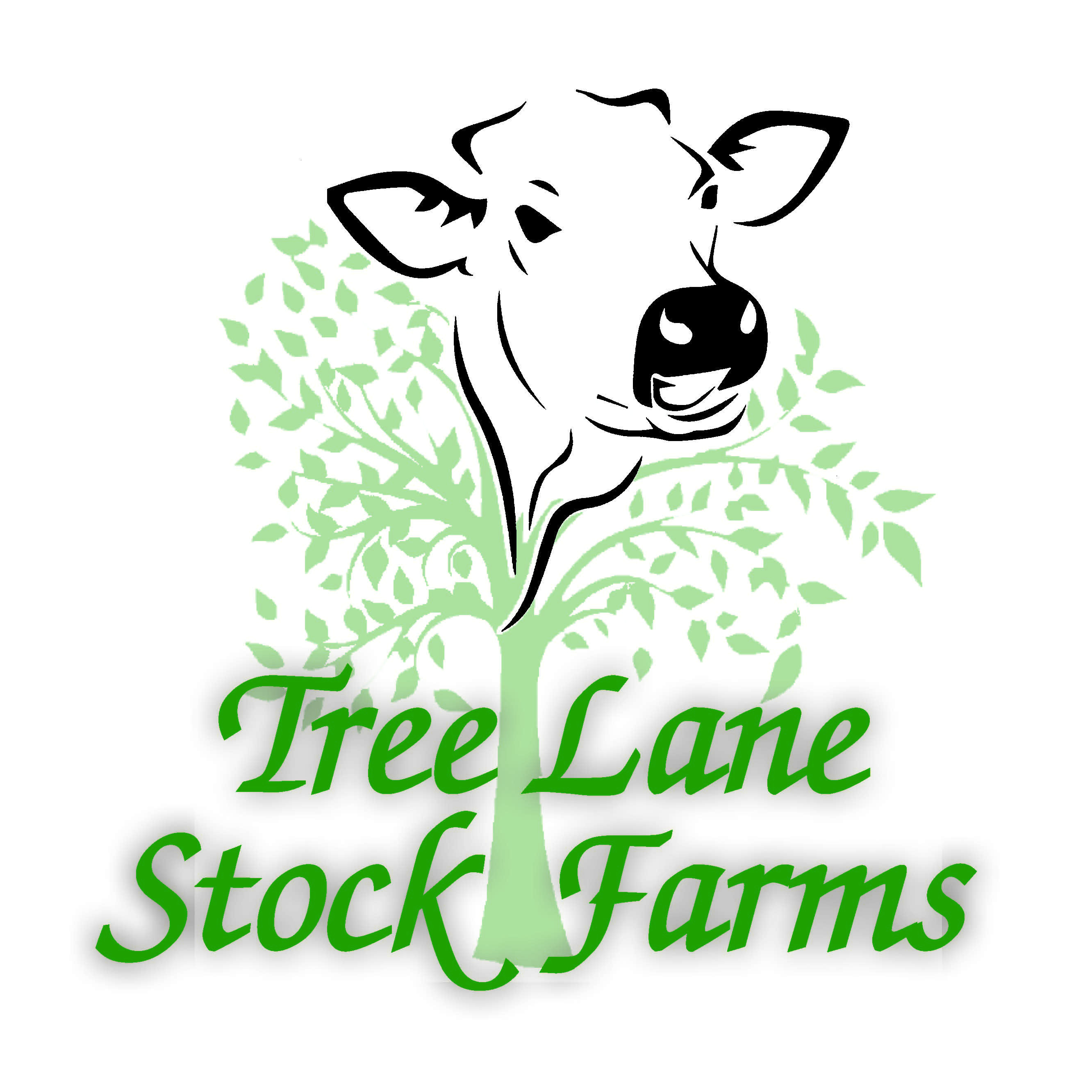 Tree Lane Stock Farms Logo
