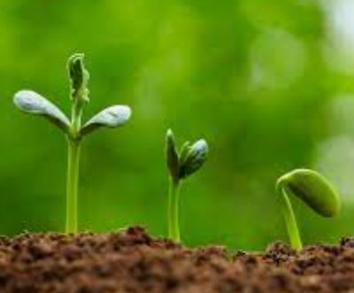 07.30.21 - Summer kids program sign up - A Seed Grows - Friday, July 30th 9:00 - 11:30