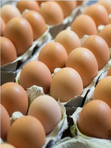 Eggs, Chicken