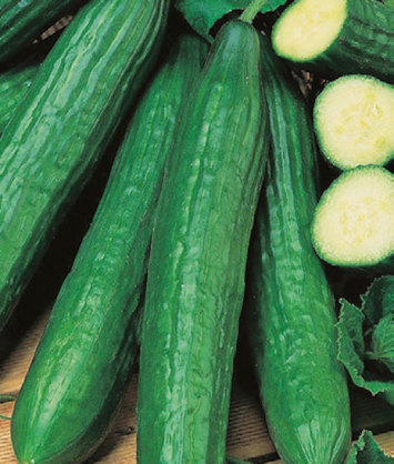 Cucumber, English Seedless