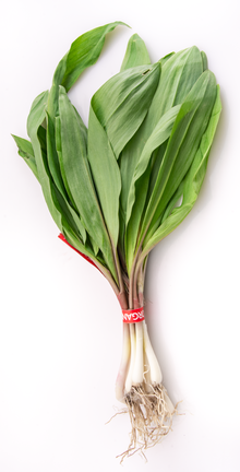 Wild Ramps - small bunch