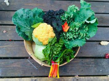 2021 Vegetable CSA Share- MINI SIZE