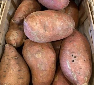 Potato, Sweet