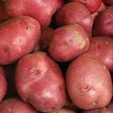 Potato, Red