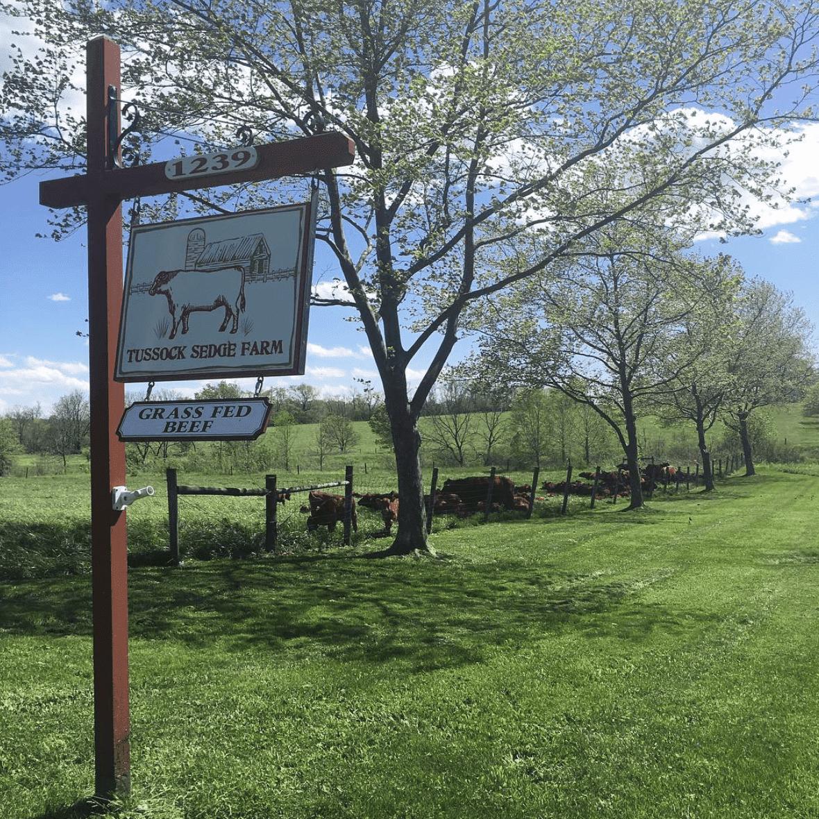 Tussock Sedge Farm Sign