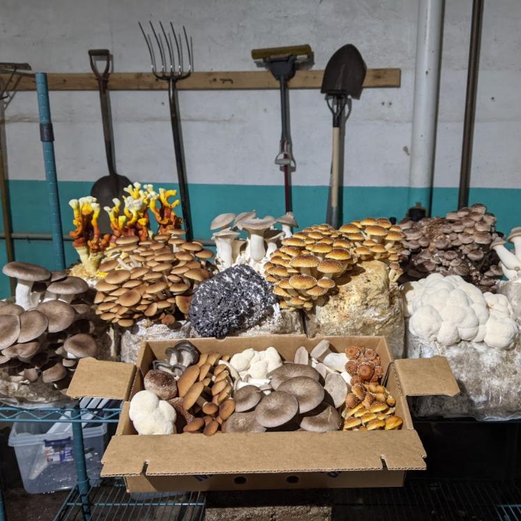 Mycopolitan Mushrooms