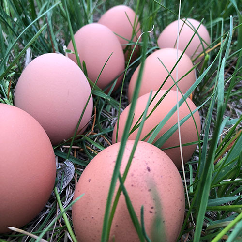Dozen Large Eggs