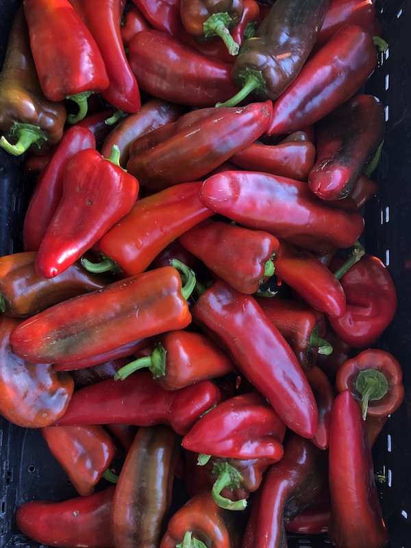 Sweet Delilah Peppers (from Crow's Farm)