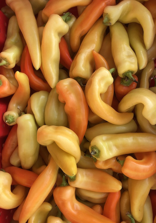 Banana Peppers (from Crow's Farm)