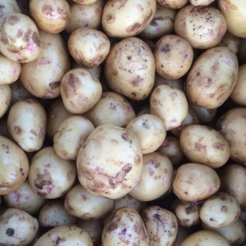 Gold Potatoes (from Crow's Farm)