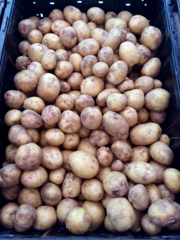 Potatoes (Gold)