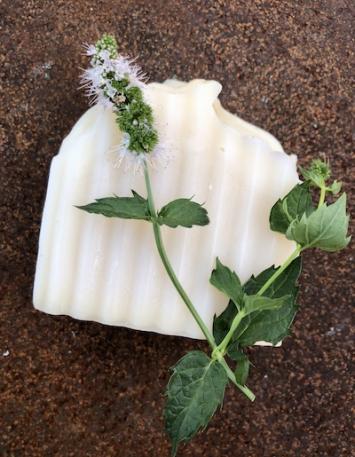 Spearmint Coconut Milk Shampoo/Body Soap