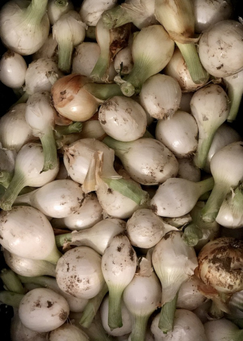 Onions (White) From Crow's Farm