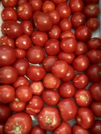 Slicing Tomatoes (from Crow's Farm)