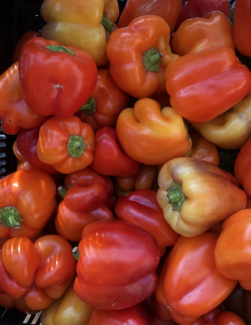 Red Bell Pepper (from Crow's Farm)