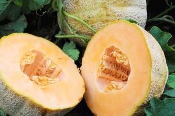Organic Melon Seeds