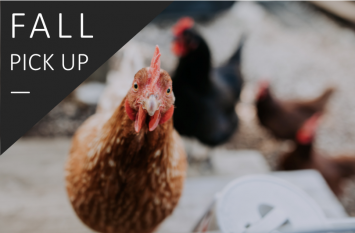 1 to 24 Hens >> Fall Sale