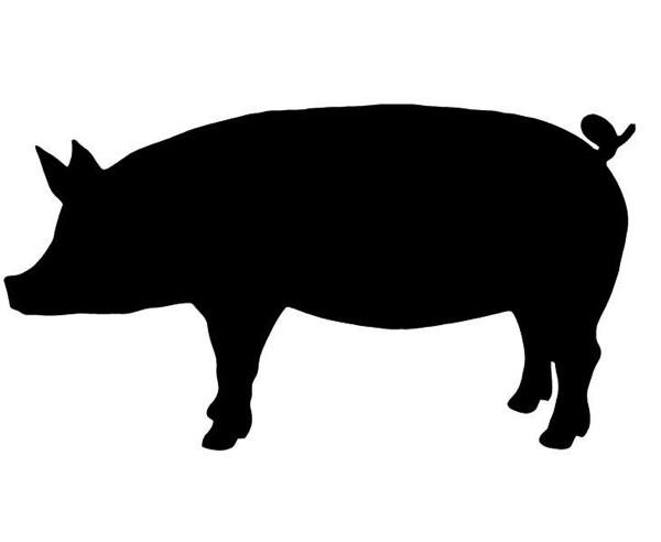 MVP Pork Box