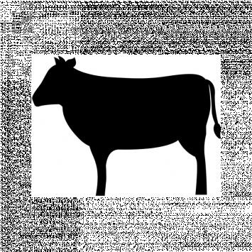 MVP Beef Box