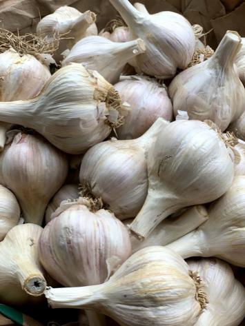 Garlic - (1 head)