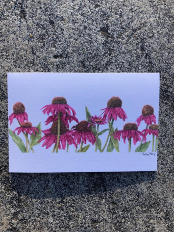 Note Card - Coneflower