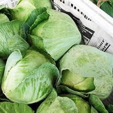 Cabbage - Green - (1 head)