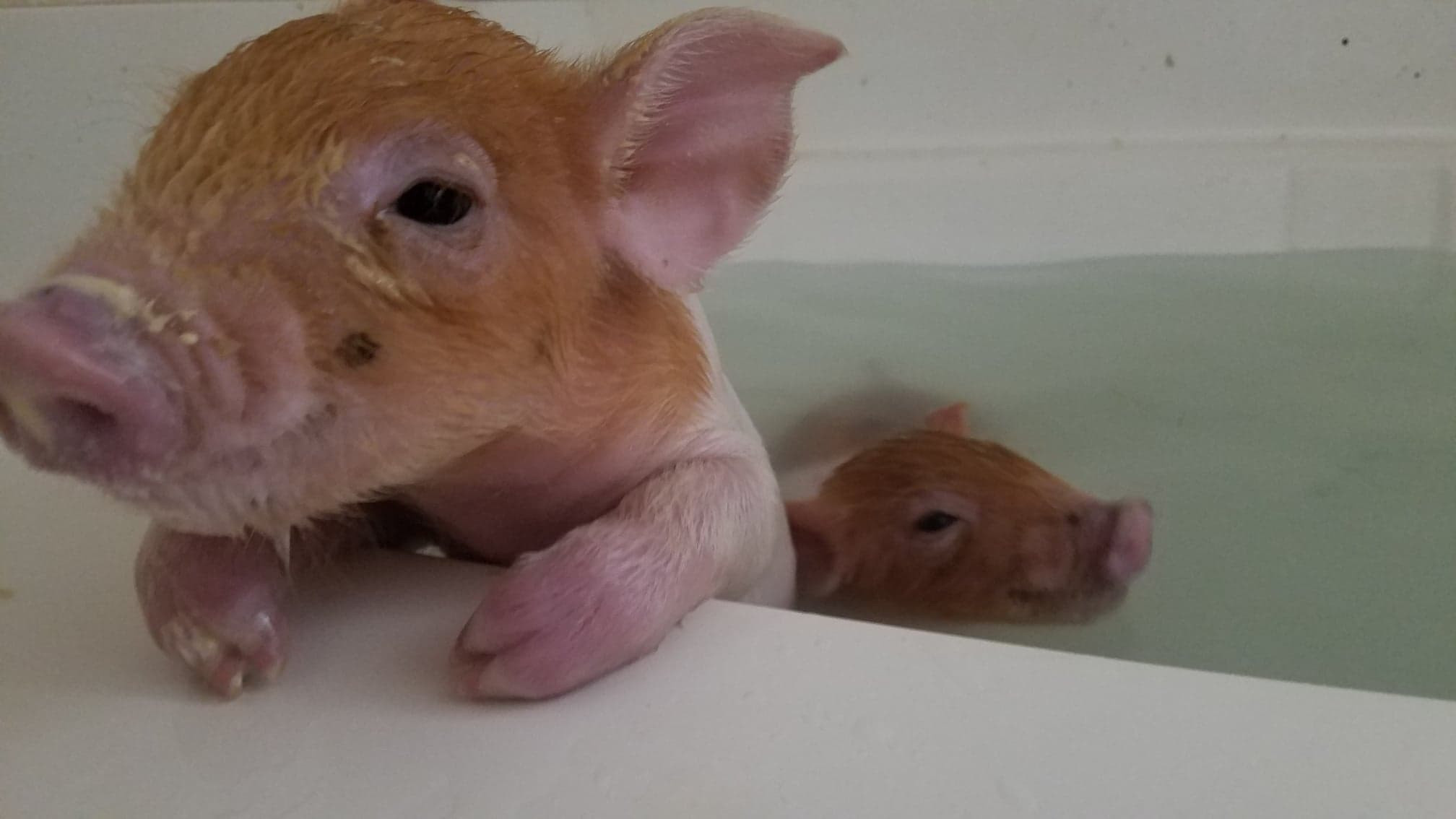 Just taking a swim