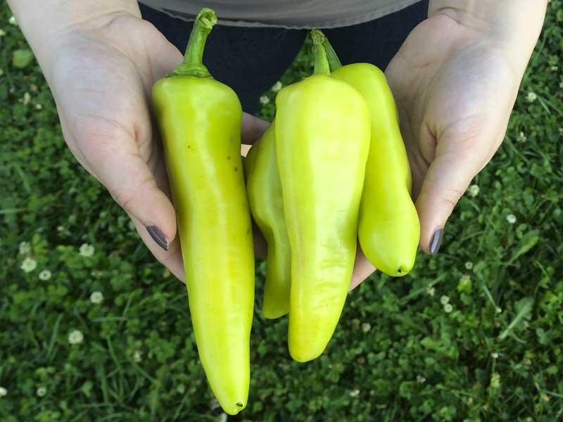 peppers.jpg