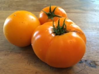 Tomatoes-Yellow