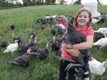 Whole Turkey 11-12 lbs