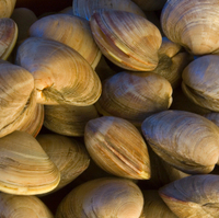Tuscan Little Neck Clams | Gourmet Italian