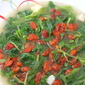 Stir Fried Baby Spinach with Wolfberries