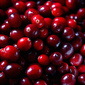 Cranberry Sauce (low sugar, if desired)