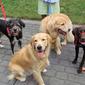 Homemade Dog Birthday Cakes--Dog Approved