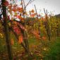Gourmet 3-Night Holiday, Autumn in Italy